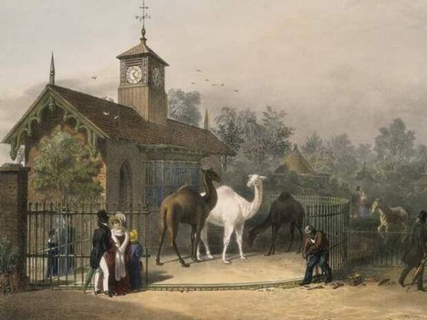 3. Лондонский зоопарк животные, зоопарк