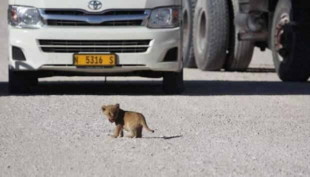 Африка: животных придется пропустить. /Фото: animalworld.com.ua