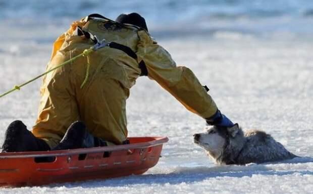 10 историй, которые доказывают, что мир спасет именно доброта все будет хорошо, доброта, жизнь, поступки