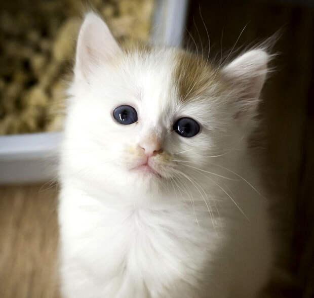 Внимание! Пятничный котик Плюш потерял мячик!