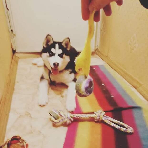 Можете забрать у собаки косточку? Прикольное видео