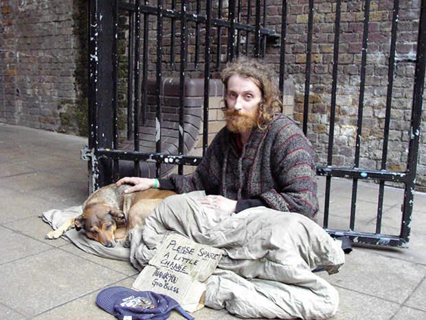 34.  бездомный, любовь, собака