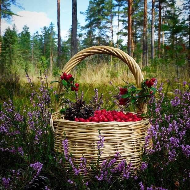 Красоты России (#574)