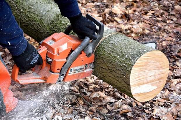 В Верхнем городском парке Рязани спилят ещё 50 деревьев