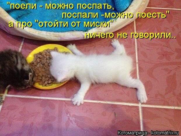 """Котоматрица: """"поели - можно поспать,  поспали -можно поесть"""" а про """"отойти от миски""""  ничего не говорили.."""