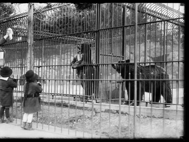16. Наблюдение за медведями животные, зоопарк