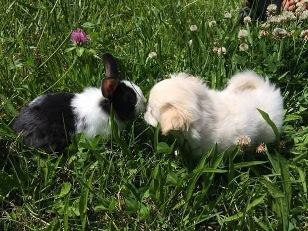 10. Бип-бип для маленького кролика животные, носы, прикол, юмор