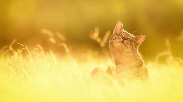 Кошки в фотографиях Сэйдзи Мамия