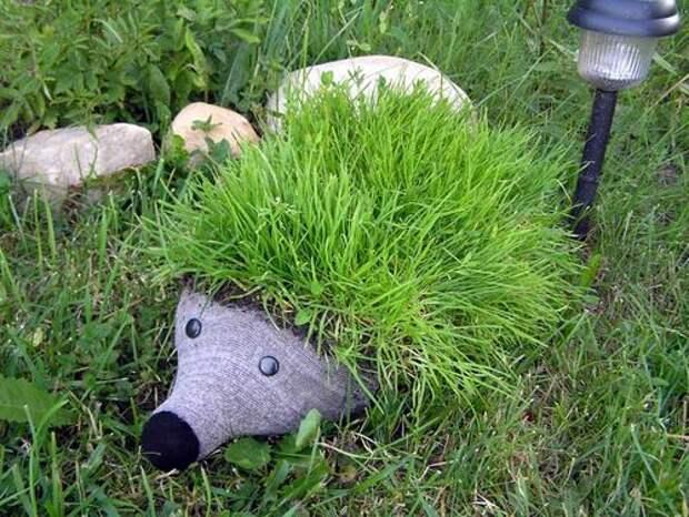 Газонную траву на спинке ежика можно заменить кактусами или суккулентами