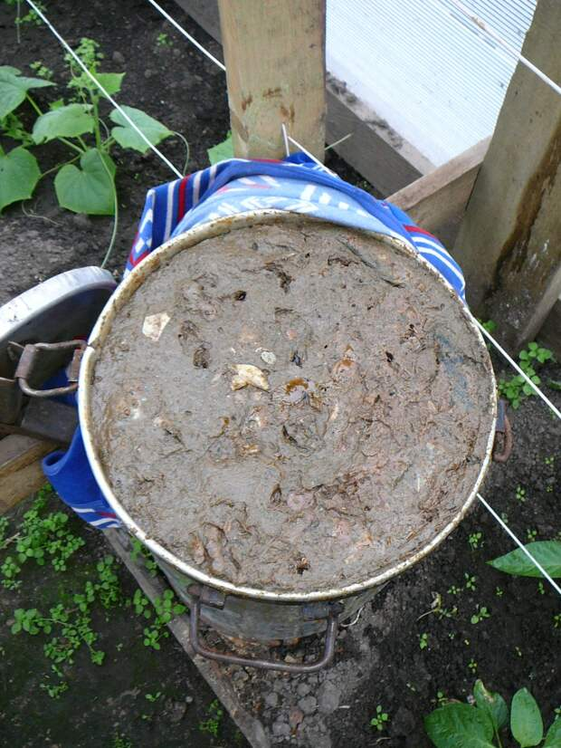 В условиях Сибири теплица  - идеальное место для созревания гарума. Автор выставил флягу для ферментизации в конце апреля, хотя рыба была просолена и пересыпана травами 25 марта. До конца апреля флага стояла в сенцах