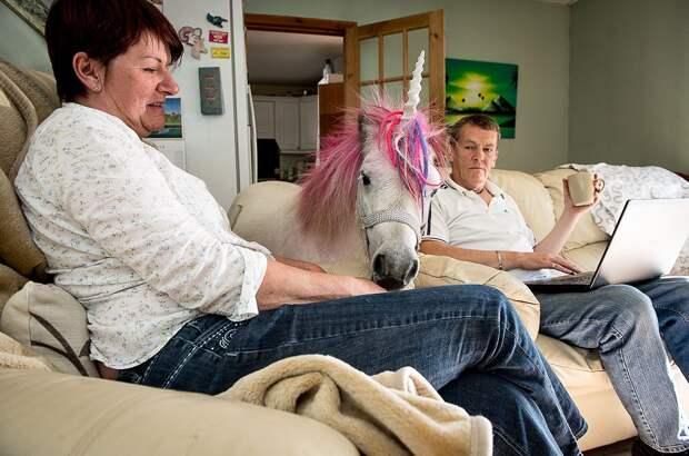Шотландская пара держит «единорога» в качестве домашнего питомца