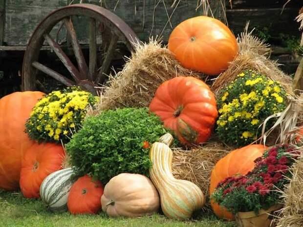 Harvest Scene of Pumpkins - Фото обои на рабочий стол FindWall.RU