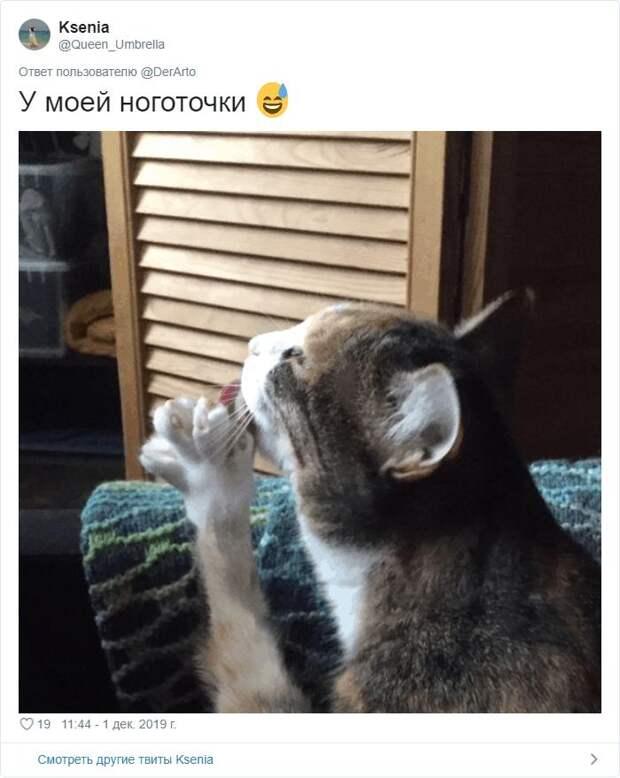 Посмотрите, чем занят ваш кот прямо сейчас? Пользователи сети делятся фото МУРлык, которые то спят, то пакостят