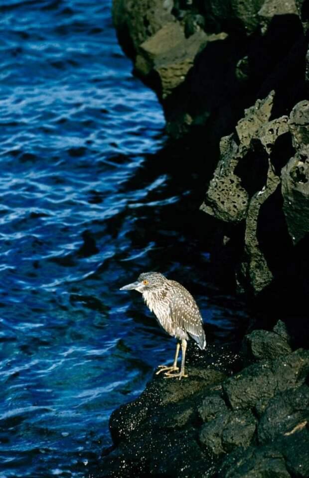 Птица на камне.