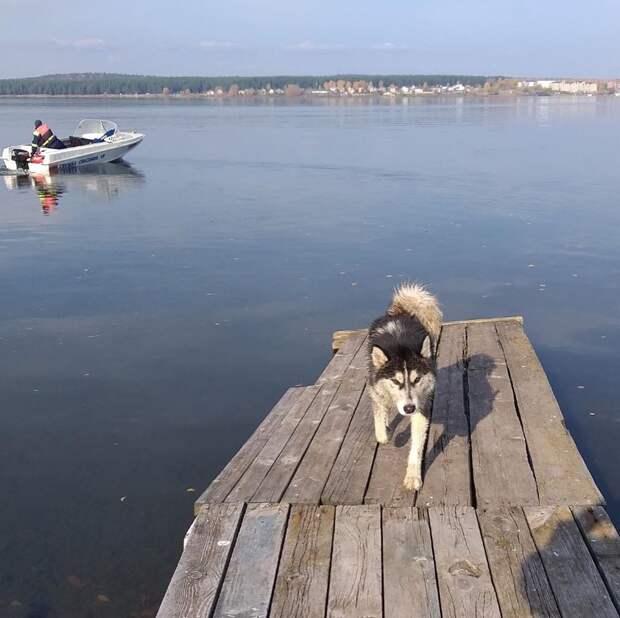 В Воткинске спасли застрявшую на отмели собаку