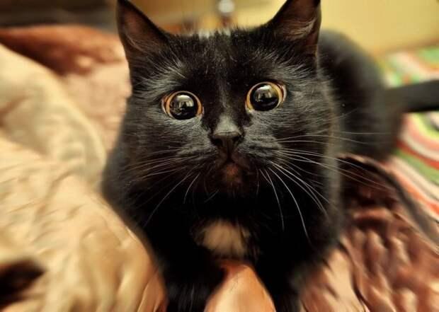 4. Какие глазищи животные, коты, кошки, милота, питомцы, фото