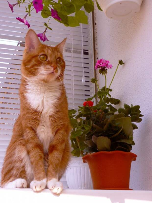 P1120242-460x613.jpg кот на балконе (460x613, 76Kb)