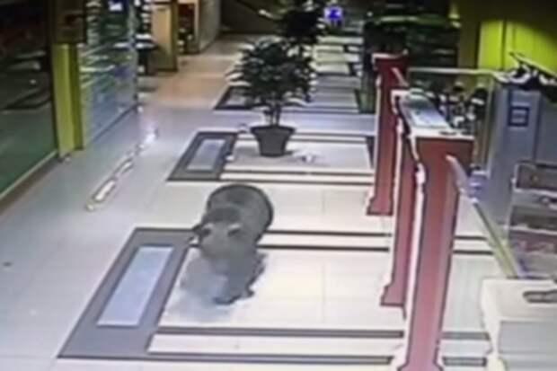 А Мишу всё равно жалко: В хабаровском детсаду застрелили устроившего погром в торговом центре медведя