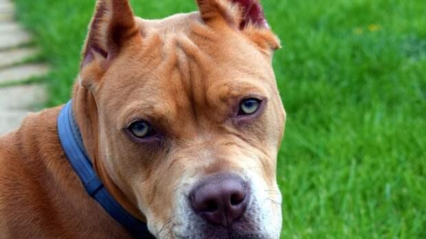 Владельцев собак призвали не оставлять питомцев на привязи у магазинов