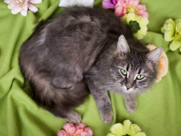 Пятничные котики: богиня Ксюша с зелеными глазами