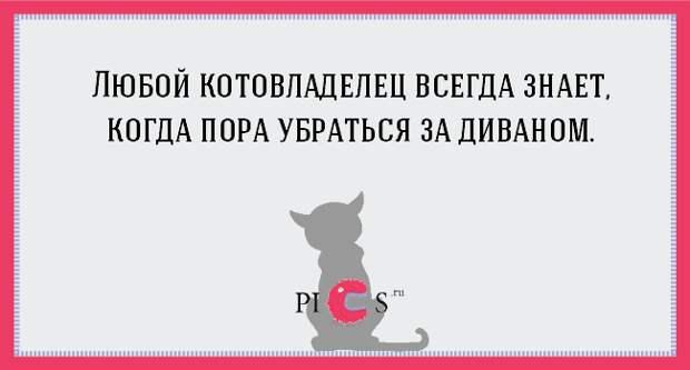 catowner13