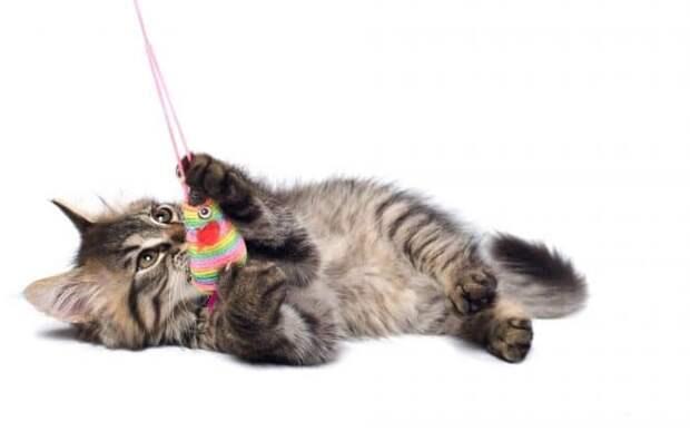 котик играется