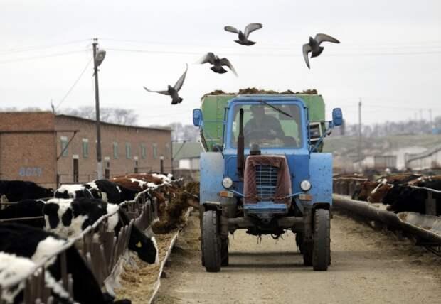 Гранты от Минсельхоза резко увеличили число фермеров в России