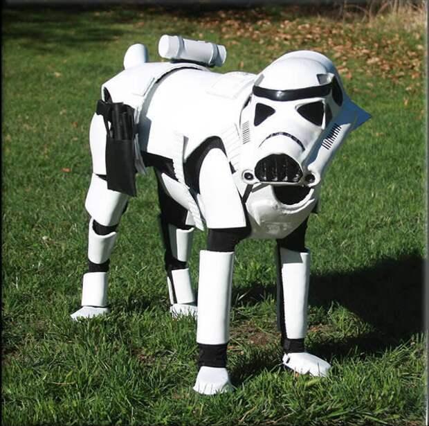"""29 домашних любимцев, которых нарядили в костюмы из """"Звездных войн"""" животные, звездные войны"""