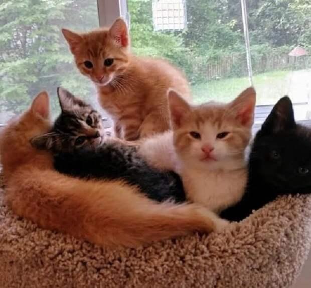 Подросшие котята