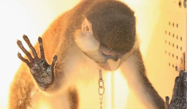 Жители Серова пожаловались на«рабские» условия для животных вконтактном зоопарке