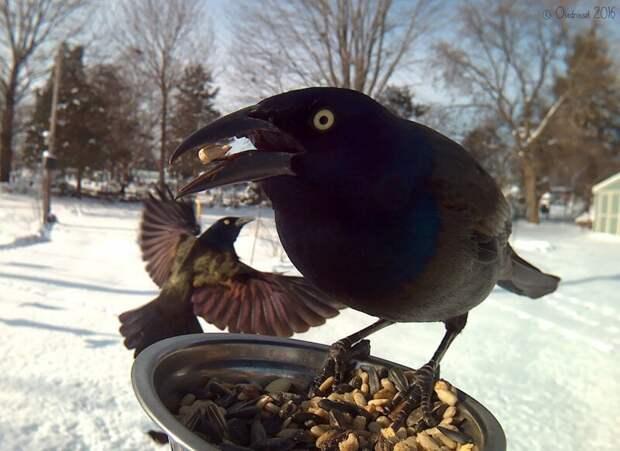 Женщина прикормила птиц и делает потрясающие портреты, пока они едят зима, птицы, фотографии