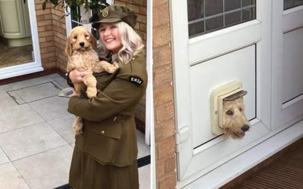 Девушка купила щенка некрупной породы, но через полгода ее ждал сюрприз