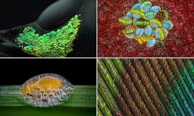 20 лучших работ с конкурса микрофотографии Nikon Small World 2018