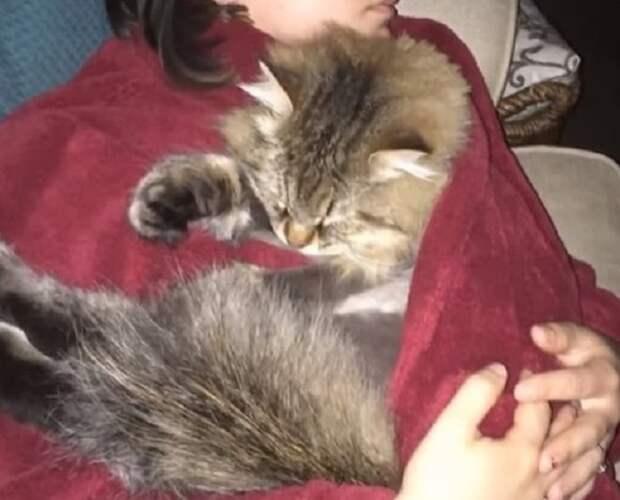 Кот недолюбливал хозяйку, но внезапно переменил к ней отношение: он почувствовал, что с ней что-то происходит