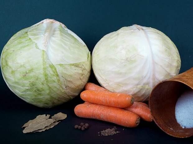 Лучшие сорта капусты для засолки