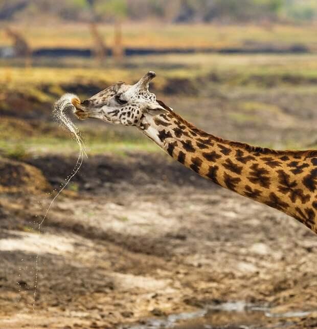 Сафари в фотографии