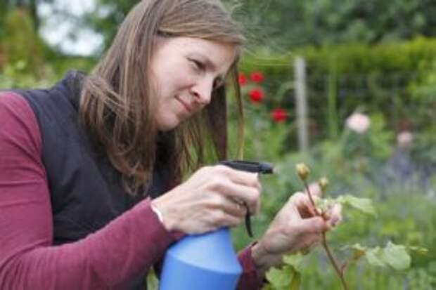 Вот как бороться с тлей, чтобы не навредить цветам: хитрости опытных садоводов