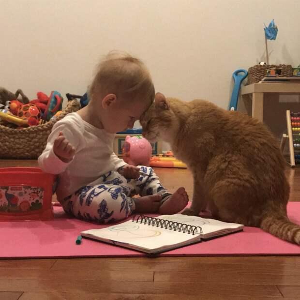 """12. """"У моего 1,5-годовалого сына и 14-летнего кота - любовь"""""""