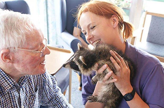 Знакомство с енотом  дом престарелых, животное