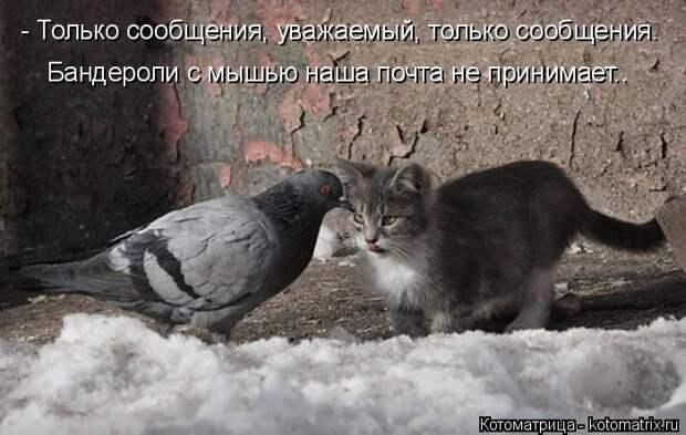 Котоматрица: - Только сообщения, уважаемый, только сообщения. Бандероли с мышью наша почта не принимает..
