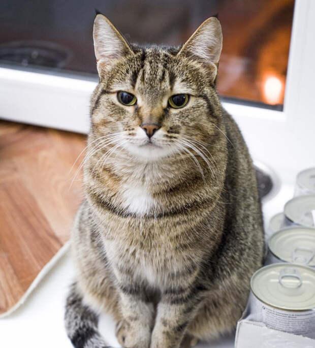 Пятничная кошечка Сима – хранитель вкусного