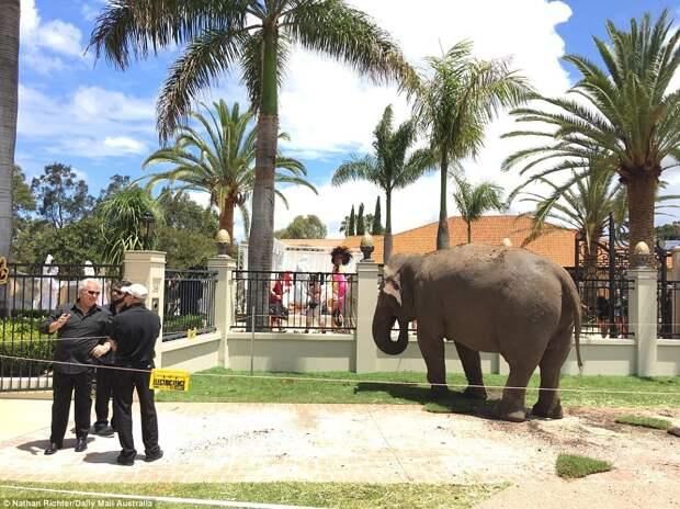 Слоны, звериные маски и обнаженные фигуры: как проходит самая дорогая вечеринка стоимостью в 250 миллионов долларов