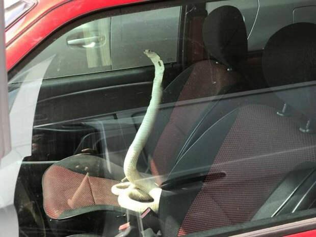 17 курьезных фотографий, сделанных из окна автомобиля