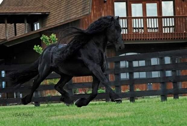 """Найден """"самый красивый в мире"""" конь"""