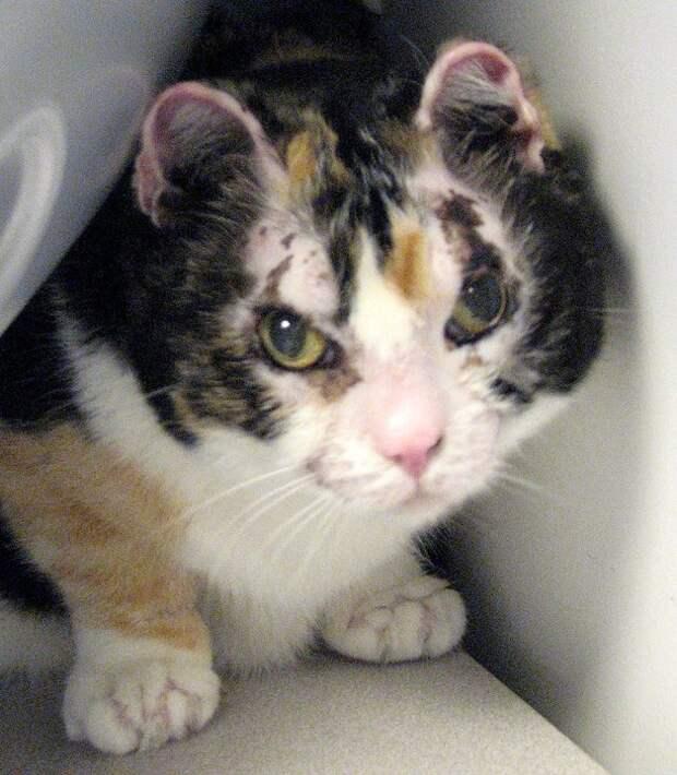 Кошка пять раз возвращалась в пылающий дом, чтобы вынести всех пятерых своих котят