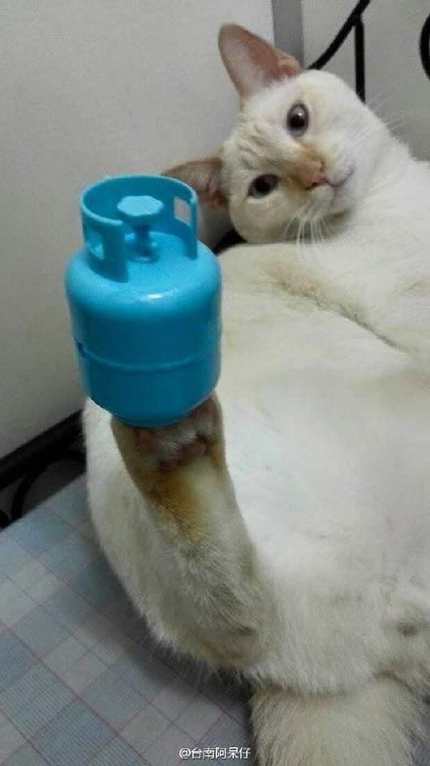Пропан? вещи, кот