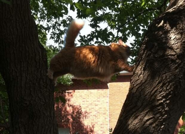 Доказательства, что кошки более тупенькие, чем миленькие — сами попали впросак