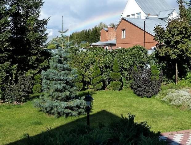 Великолепный хвойный сад!