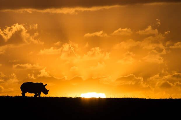 Пост восхищения носорогами