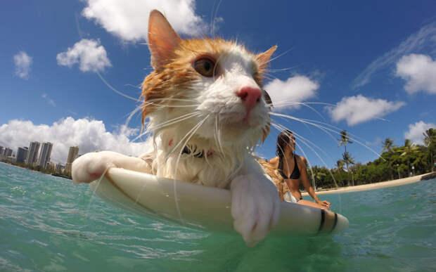 Лучшие фотографии животных прошедшей недели